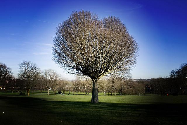 I-heart-tree-Jonny-Hughes