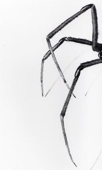 catherine_pilgrim_spider_legs-e1565393864337.jpg